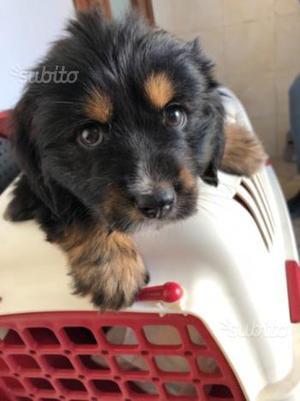 Regalo cagnolina di 2 mesi