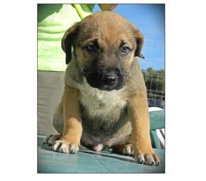 Carmelina, cucciola di 2 mesi e mezzo in canile