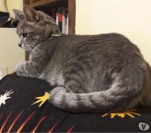 Smarrito gatto Tap