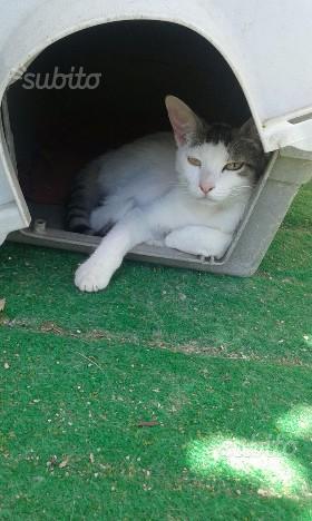 Regalo gatta bianca Masha