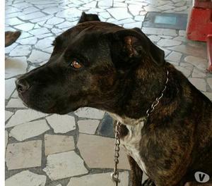 Shiva,dolcissima cagnolina,in cerca di una famiglia