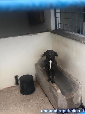 Adozione del cuore AGATA Cane Altro cane Massa