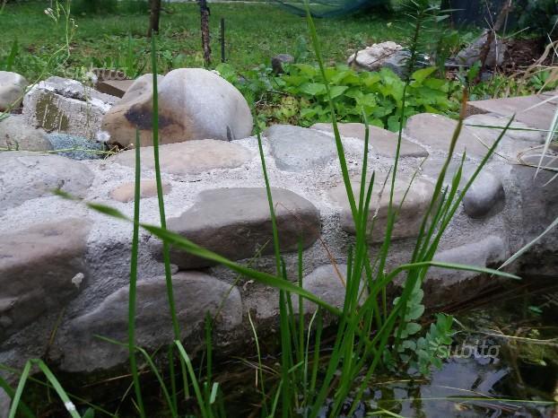 Piante laghetto acquatiche palustri posot class for Piante laghetto