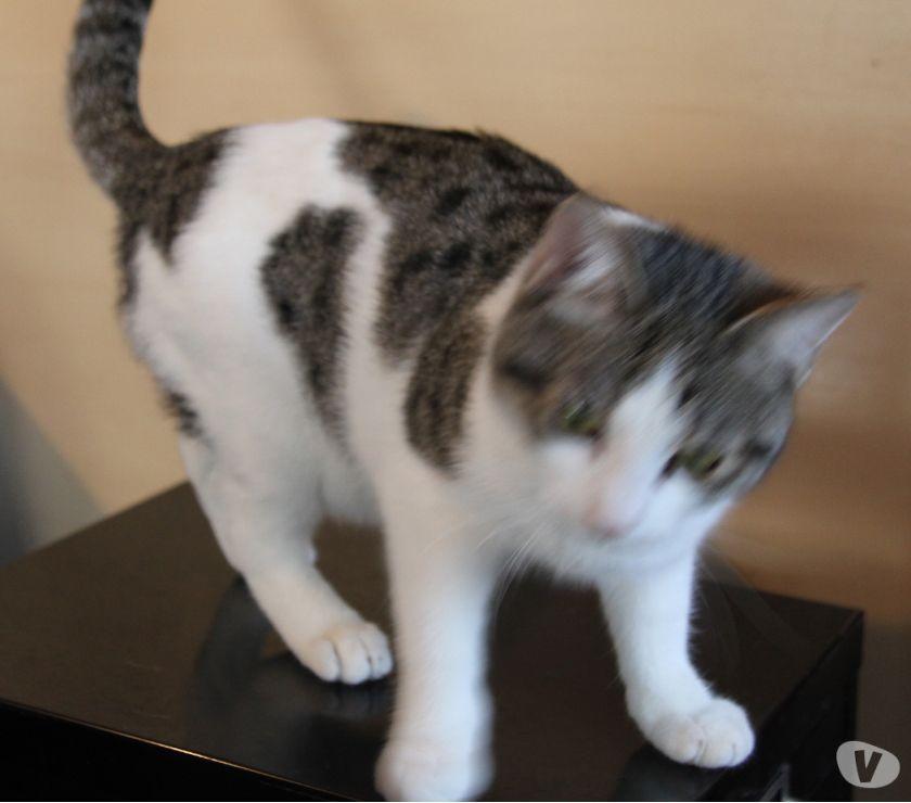 Penny, gattina cucciola 10 mesi da adottare