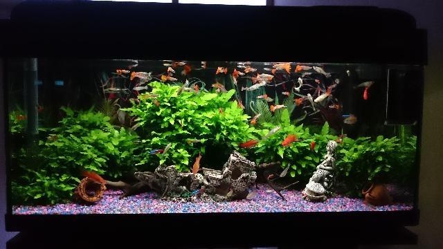 Acquario litri compreso i pesci posot class