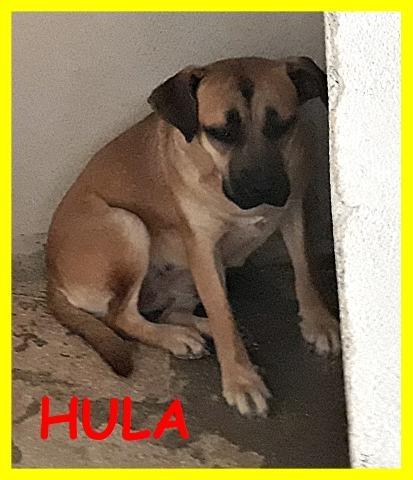 HULA E' UNA BELLISS. CUCCIOLONA DI 1 ANNO