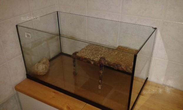 Acquario pesci tartarughe pet company posot class for Acquario tartarughe completo