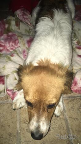 Regalo cagnolina di 7 mesi