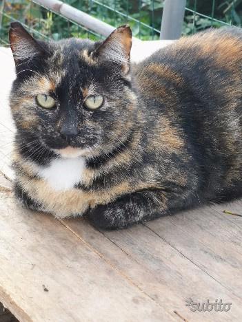 Regalo gatta di due anni