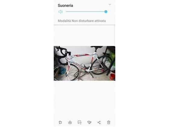 Bici carbonio corsa saccarelli