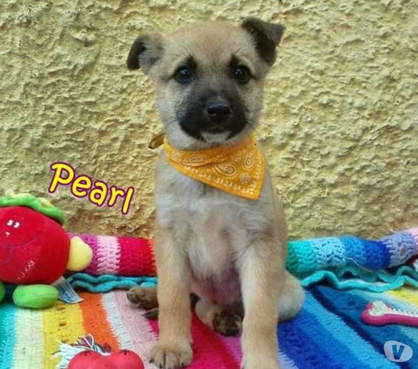 Pearl meravigliosa cucciola in adozione