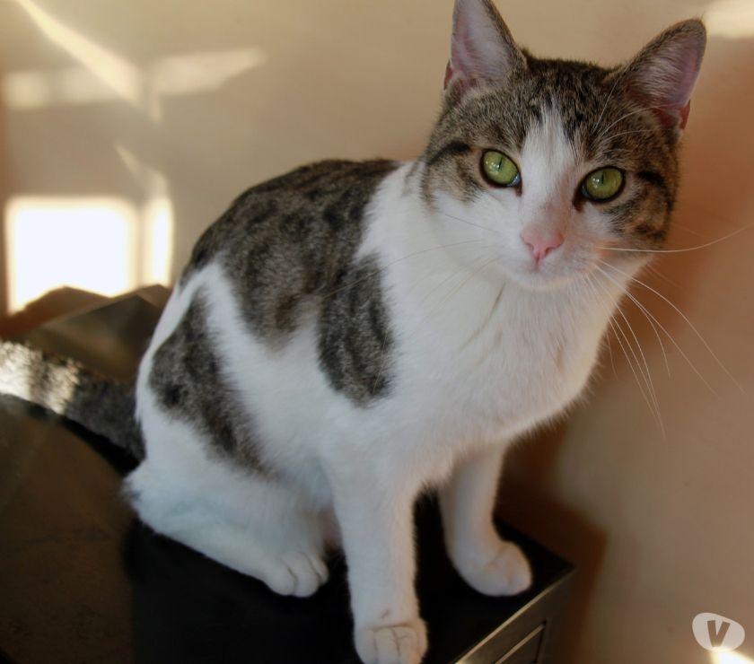 Penny gattina cucciola 10 mesi