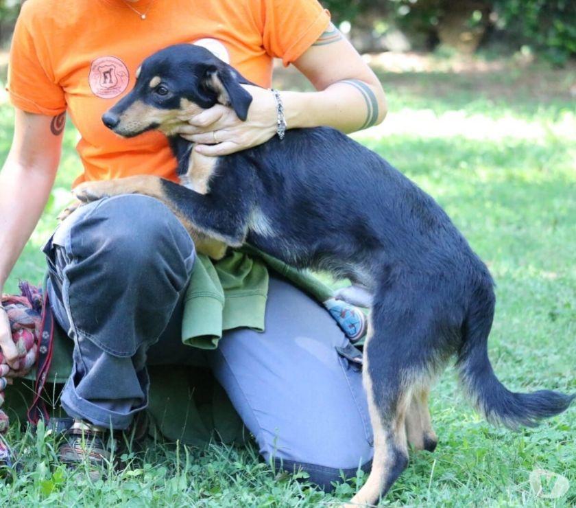 cane cucciolo Abric cerca urgentemente casa
