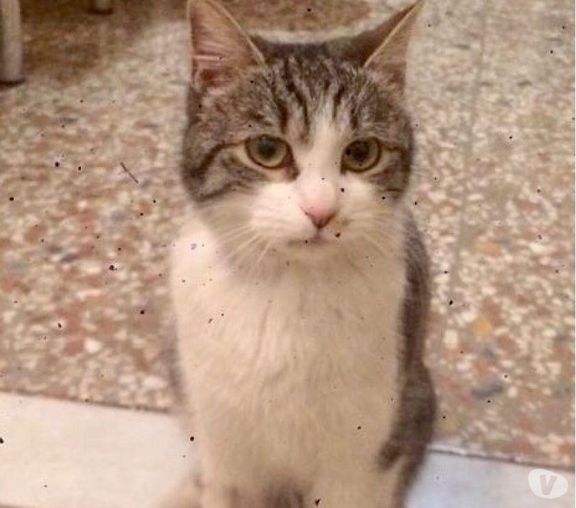 Gattina 5 mesi sterilizzata e testata