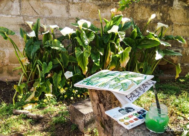 Piante di Calle Calla gigante vaso da 10cm