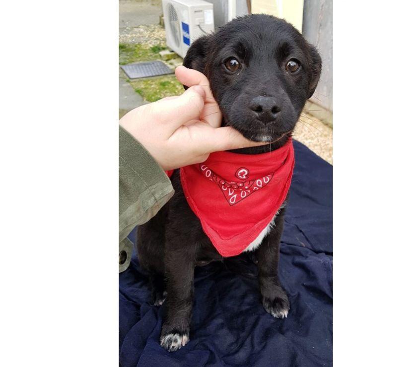 Denise,cucciola di tre mesi in adozione dal canile...