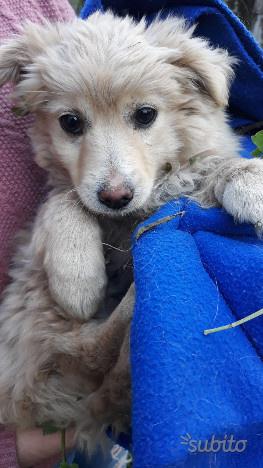 Azzurra cucciola femmina 3 mesi taglia media