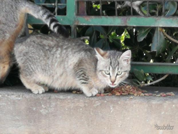Gattina di due mesi