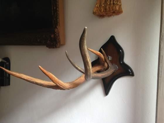 Serie lampadari con corna di cervo posot class