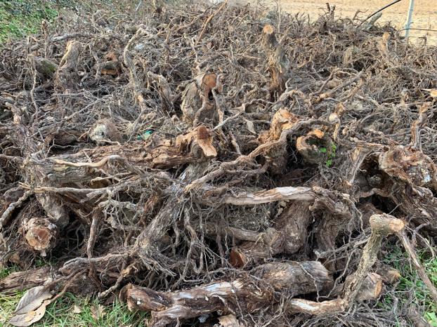 Regalo legna da ardere