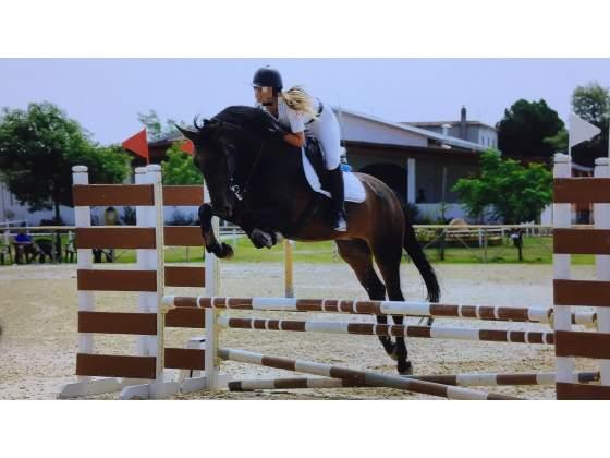 Cavallo da salto e dressage in mezza fida