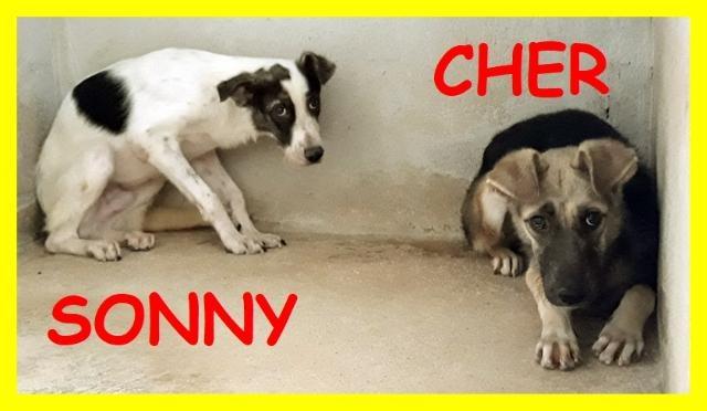 SONNY E CHER CUCCIOLONI 1 ANNO