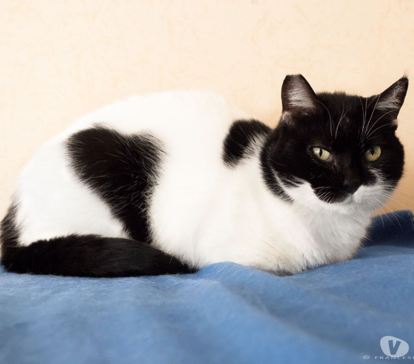 Adotta una gatta adulta tranquilla ed educata