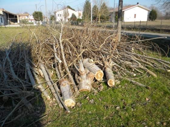 Gratis legna da bruciare proveniente da potatura di albero