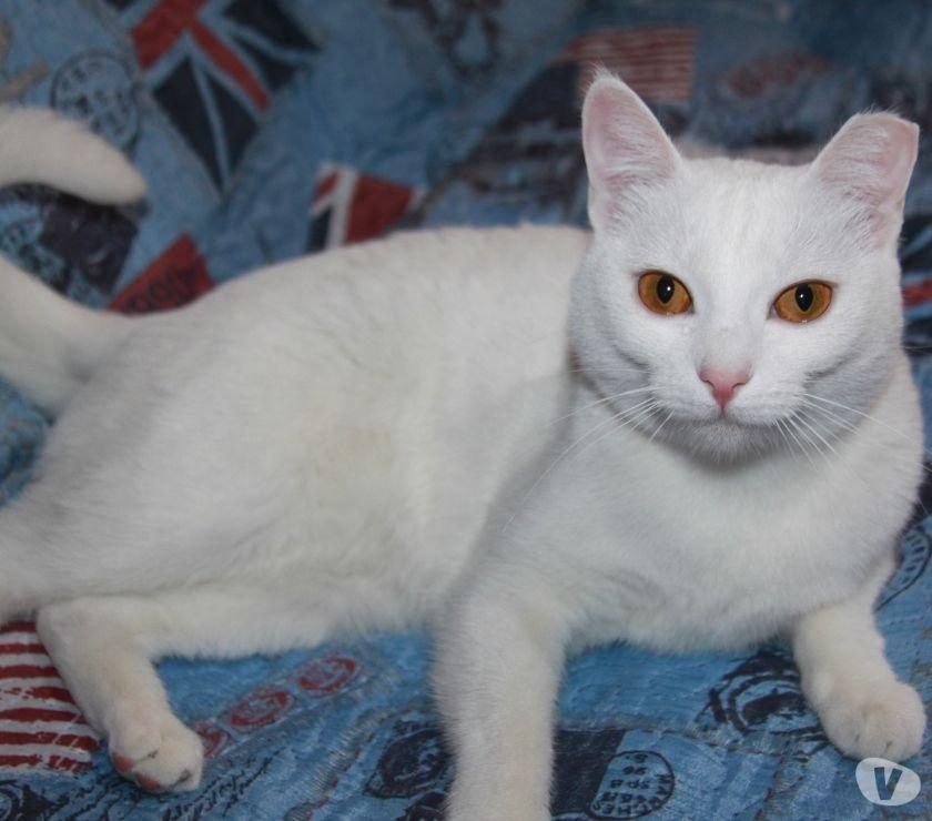Nuvolina, gatta adulta 1,5 anni