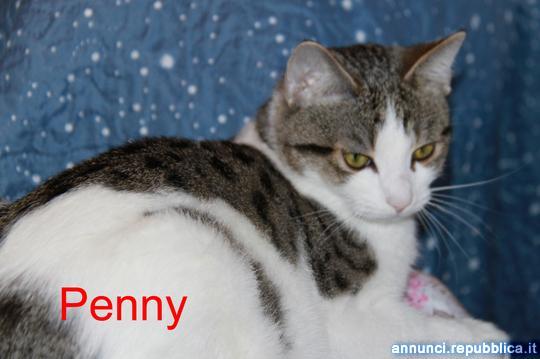 Penny gatta adulta da adottare Gatto Padova