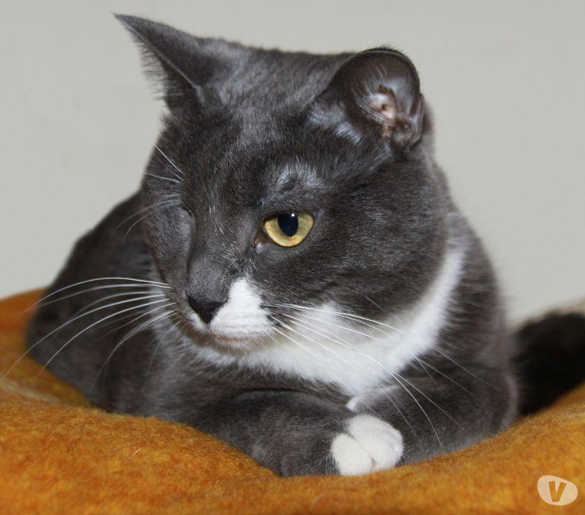 Perlina, gatta adulta 3 anni da adottare