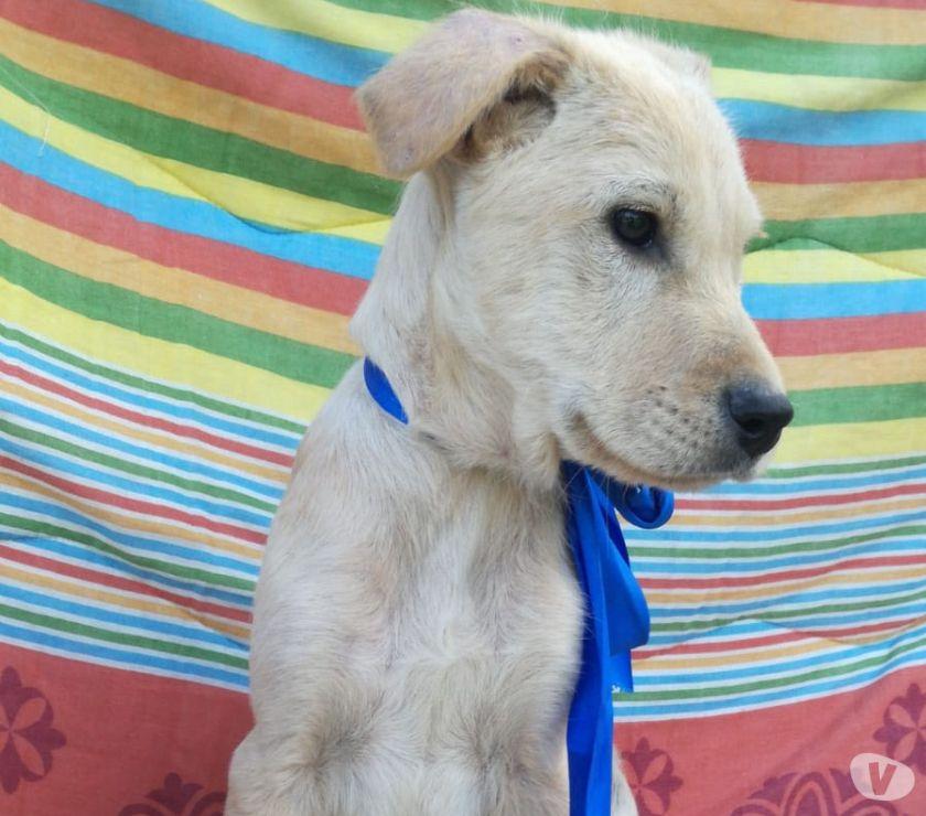 BRONTOLO: cucciolo 5 mesi taglia grande cerca famiglia