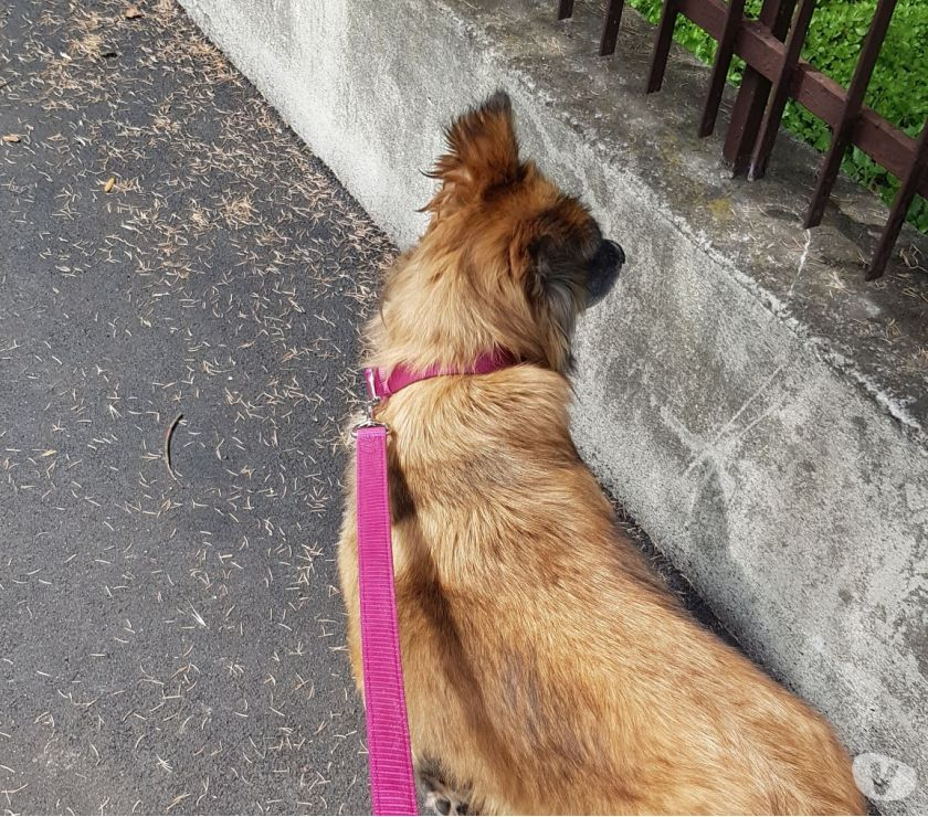 Regalo cagnolina di 2 anni
