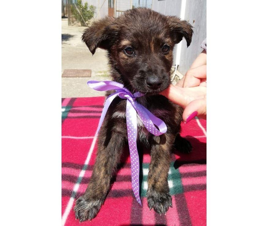 Kira,due mesi,in adozione dal canile...