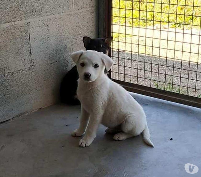 Zara, 3 mesi, cucciola tenerella in adozione