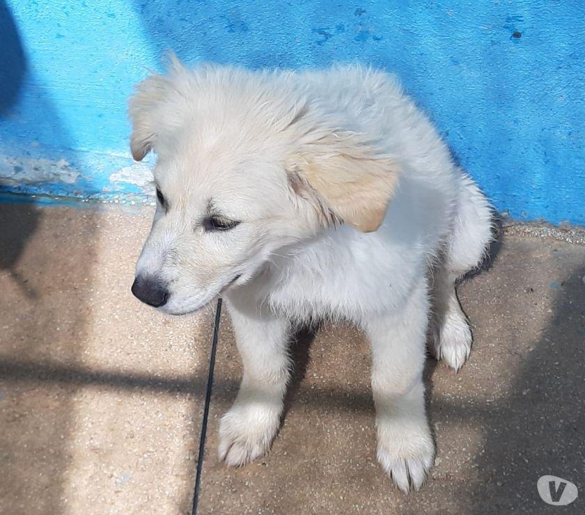 REGALO Pepita cucciola 4 mesi tg media vaccinata e chippata