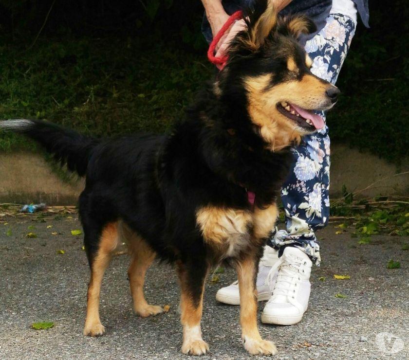 Sissi cagnolina buonissima cerca casa con urgenza