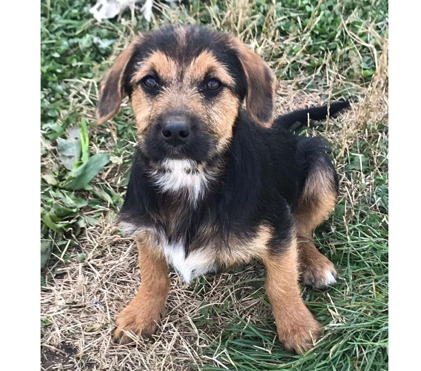 REGALO Carlito cucciolo 3 mesi vaccinato e chippato