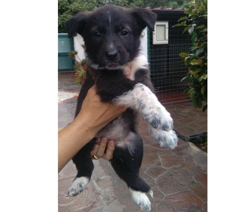 REGALO cuccioli 2 mesi vaccinati SALVIAMOLII DAL CANILE