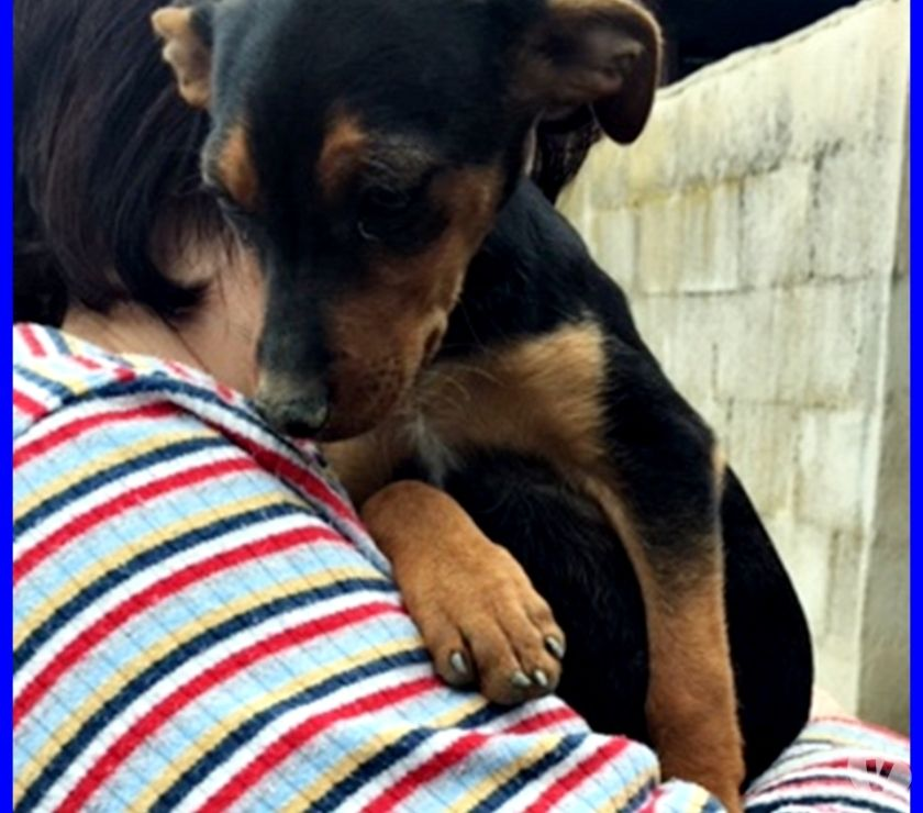 PESCA cucciolina 3 mesi simil pinscherina abbandonata con i