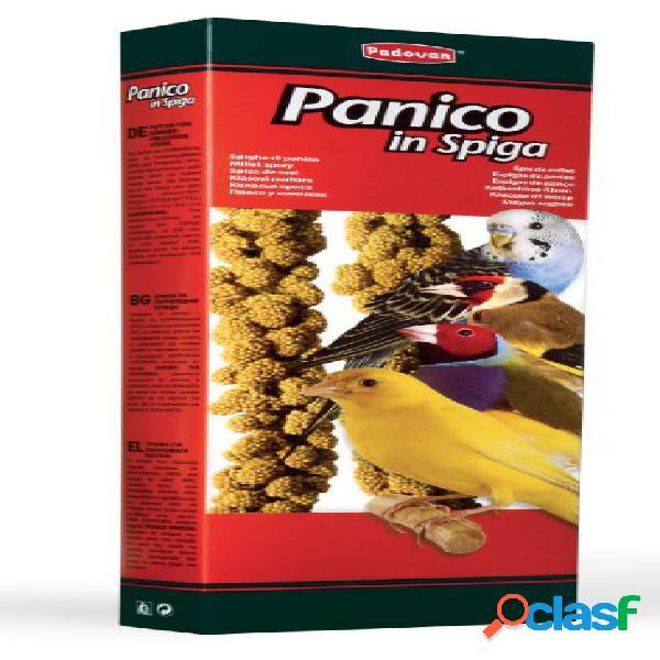 Padovan panico in spighe naturali gr 100