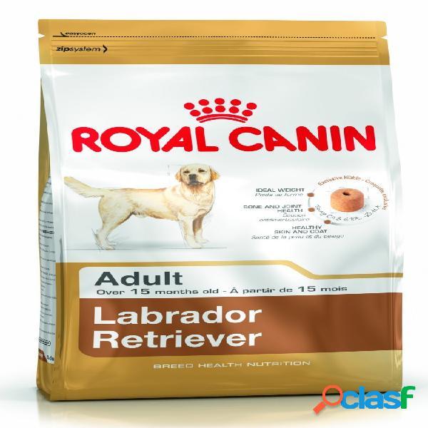 Royal canin labrador adult kg 12