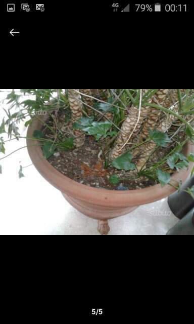 Vaso in terracotta benocci Toscana