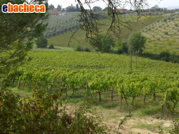 Agricolo a Montepulciano