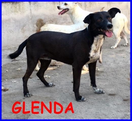 GLENDA 6 ANNI DA SEMPRE IN CANILE