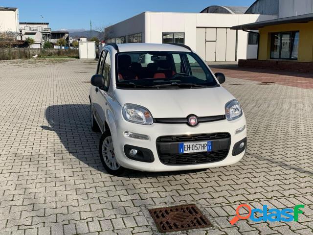 FIAT Panda benzina in vendita a Lucca (Lucca)