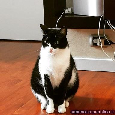 Nasino: gatto in cerca di nuova adozione Gatto Altro gatto