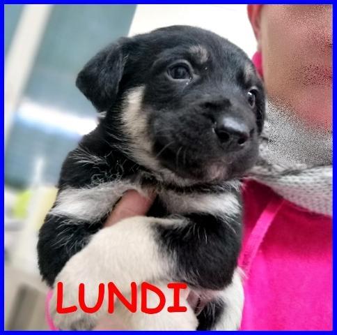 LUNDI CUCCIOLA 3 MESI