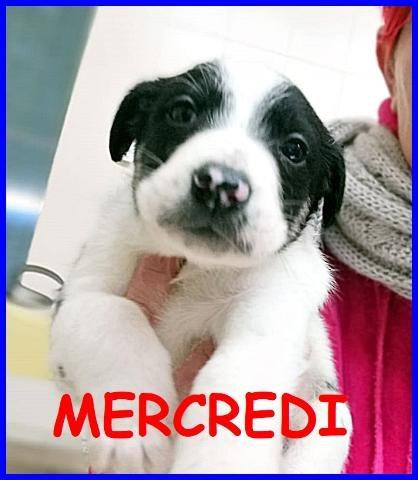 MERCREDI CUCCIOLA 3 MESI