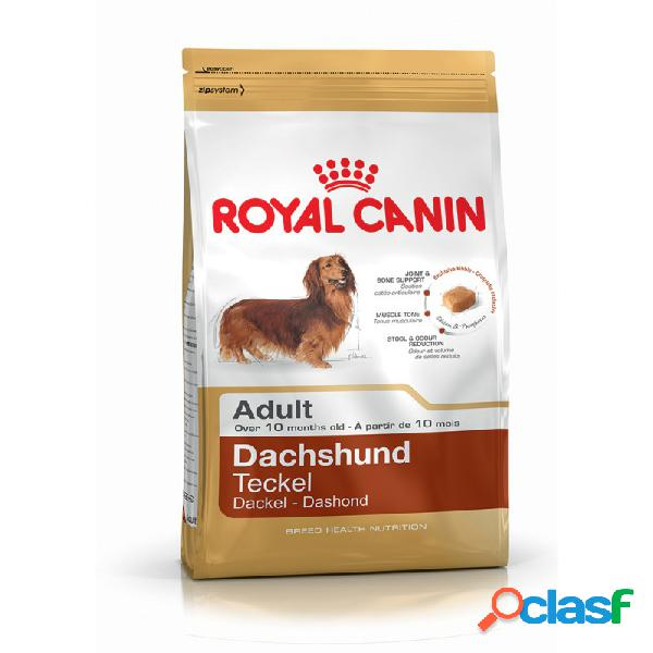 Royal Canin Razze - Royal Canin Bassotto Adult Crocchette